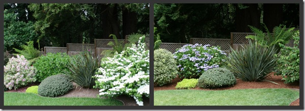 Spring and Summer Viburnum and Hydrangea