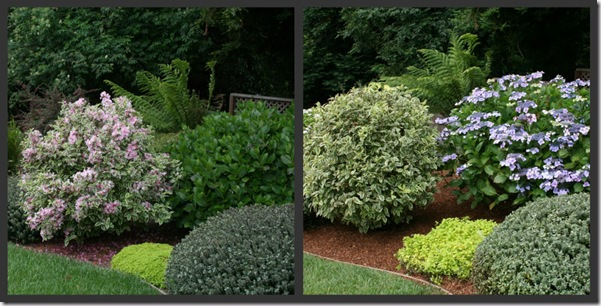 Spring and Summer Weigela to Hydrangea