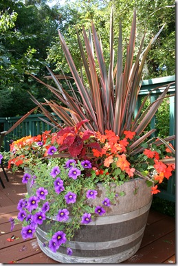 Halloween container idea - Phormium, Impatiens, etc.