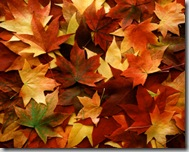 Post image for Fall Leaves: Leave 'Em and Weep