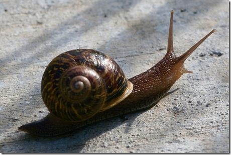 organic snail and slug control how to kill snails and