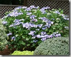 Post image for Coastal Gardening: Shade-Loving Plants for the Sea Coast