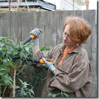 Post image for Fiskars PowerGear Lopper: Video Review In Which The Buddleja Gets It