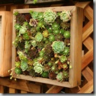 Post image for Contained: Planter Ideas for Balcony Gardens from the 2011 San Francisco Garden Show