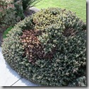 Post image for Don't Do This: Horrible Landscaping Blunders