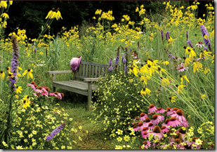Post image for Wildlife Garden Design Tip: Choose a Simple Color Palette