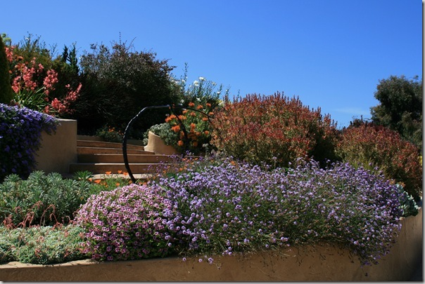 Post image for Wildlife Garden Design Tip: Using Native Plants Effectively